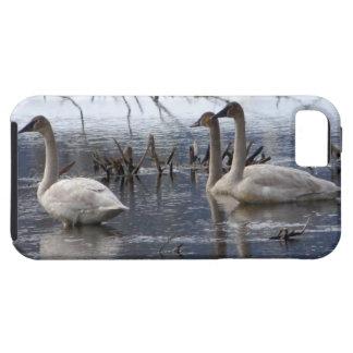 Juvenile Swans iPhone SE/5/5s Case