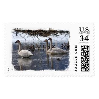 Juvenile Swans Postage