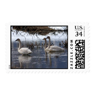 Juvenile Swans Stamps