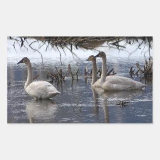 Juvenile Swans Rectangular Sticker