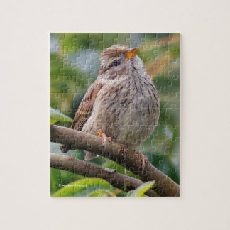 Juvenile White-Crowned Sparrow Jigsaw Puzzle