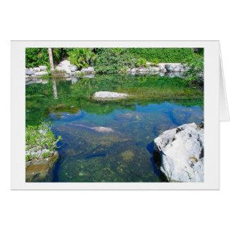 K&K - Xcaret Turtle Pond Card