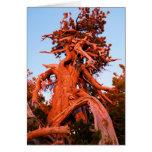 Kachina Tree Greeting Card