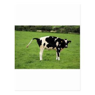 kackende Kuh Postcard