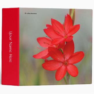 Kaffir Lily / River Lily / Hesperantha Coccinea Binder