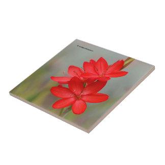 Kaffir Lily / River Lily / Hesperantha Coccinea Ceramic Tile