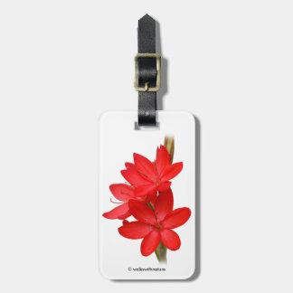 Kaffir Lily / River Lily / Hesperantha Coccinea Luggage Tag