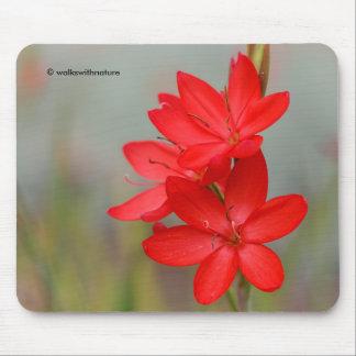 Kaffir Lily / River Lily / Hesperantha Coccinea Mouse Pad