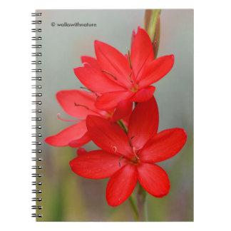 Kaffir Lily / River Lily / Hesperantha Coccinea Notebook