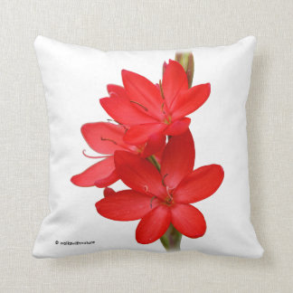 Kaffir Lily / River Lily / Hesperantha Coccinea Throw Pillow