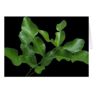 Kaffir Lime Leaves Card