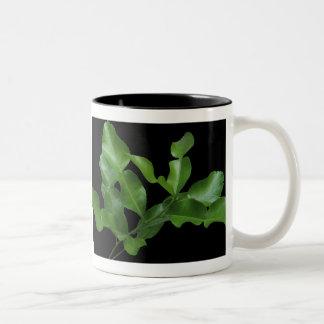 Kaffir Lime Leaves Two-Tone Coffee Mug