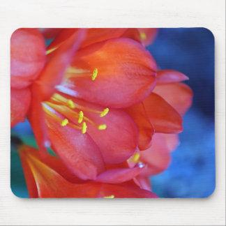 kafir lily mouse pad
