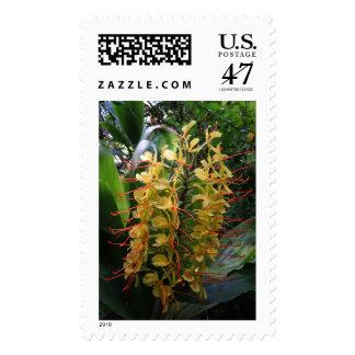 Kahili Ginger Stamp