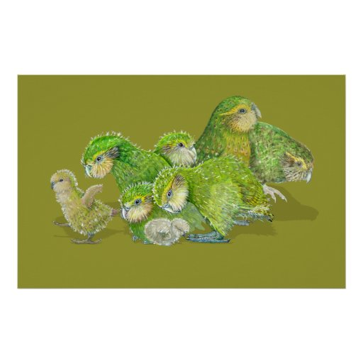 Kakapo Chick Creche Poster