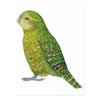 Kakapo femenino joven tarjetas postales