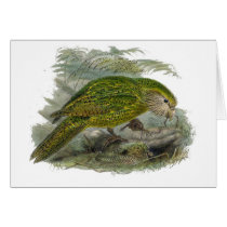 Kakapo Green Parrot Vintage Illustration