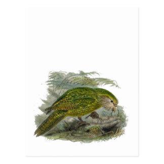 Kakapo Green Parrot Vintage Illustration Postcard