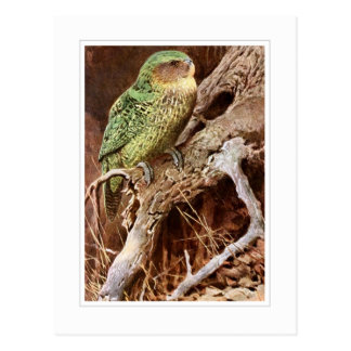 Kakapo Postales