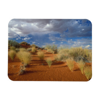 Kalahari Desert Scene, Kgalagadi Transfrontier 2 Rectangular Photo Magnet
