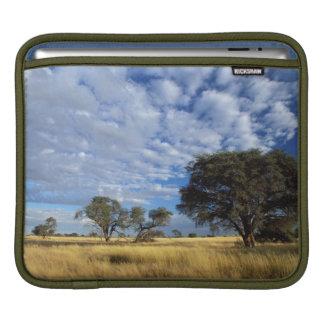 Kalahari Desert Scene, Kgalagadi Transfrontier iPad Sleeve