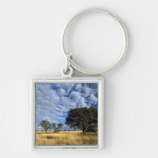 Kalahari Desert Scene, Kgalagadi Transfrontier Keychain