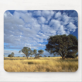 Kalahari Desert Scene, Kgalagadi Transfrontier Mouse Pad