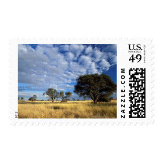 Kalahari Desert Scene, Kgalagadi Transfrontier Postage