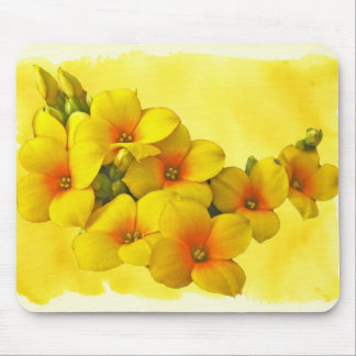 Kalanchoe amarillo - sol suculenta mousepads