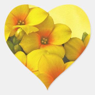 Kalanchoe amarillo - sol suculenta pegatina en forma de corazón