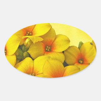 Kalanchoe amarillo - sol suculenta pegatina ovalada