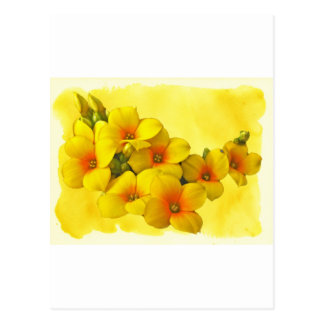 Kalanchoe amarillo - sol suculenta postal