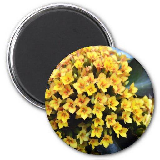 Kalanchoe Blossfeldiana 2 Inch Round Magnet