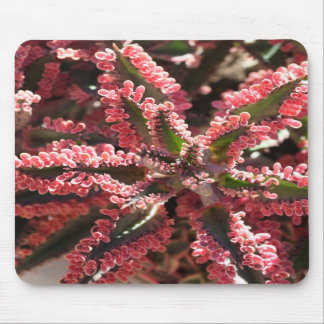 Kalanchoe 'Butterfly Wings' mousepad