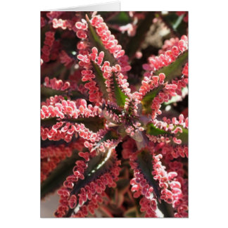 Kalanchoe 'Butterfly Wings' notecard Greeting Card