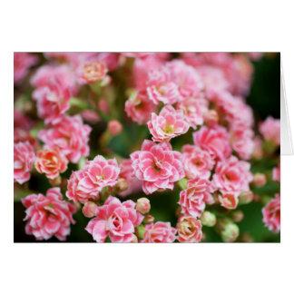 Kalanchoe doble en rosa felicitacion