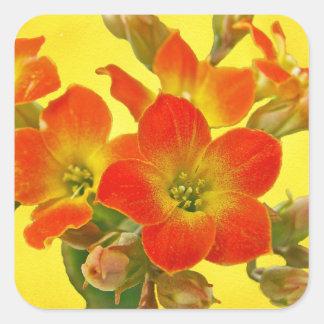 Kalanchoe rojo - sol suculenta pegatina cuadrada