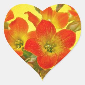 Kalanchoe rojo - sol suculenta pegatina en forma de corazón