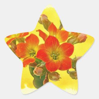 Kalanchoe rojo - sol suculenta pegatina en forma de estrella