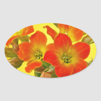 Kalanchoe rojo - sol suculenta pegatina ovalada