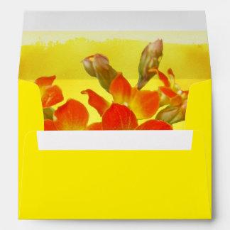 Kalanchoe rojo - sol suculenta