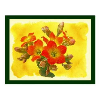 Kalanchoe rojo - sol suculenta postales
