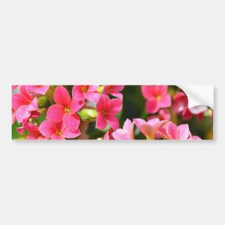 Kalanchoes rosado pegatina de parachoque