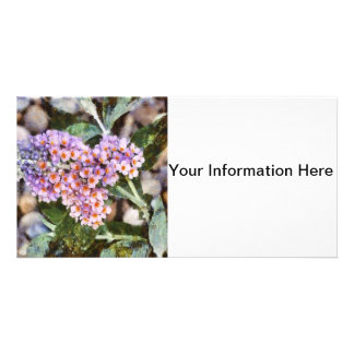 Kaleidoscope Butterfly Bush-Photo Card