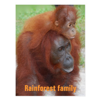 Kalimantan Indonesia Rainforest Family Postcard