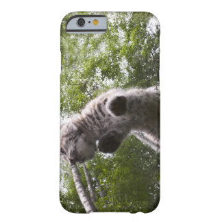 kalispell, montana, united states of america barely there iPhone 6 case