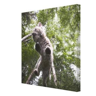 kalispell, montana, united states of america canvas prints