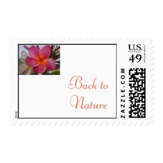 kamboja del bunga, de nuevo a la naturaleza sello