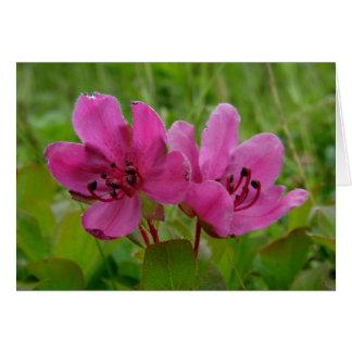 Kamchatka Rhododendron on Unalaska Island Card