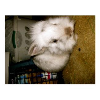 kandinsky bunny post card